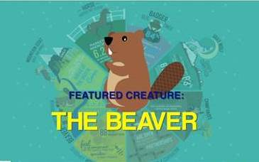 beaver cropped