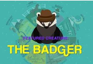 Badger video