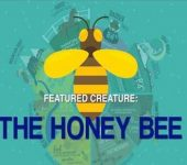 Future-Proofing Your Agency Video: Be The Bee!