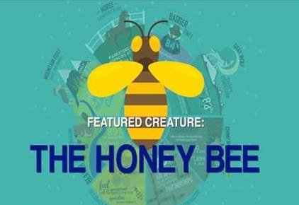 Future-Proofing Your Agency: Be like a Honey Bee
