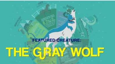Future-Proofing Your Agency: Be like a Gray Wolf
